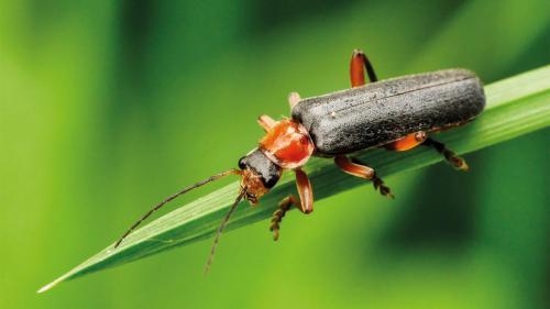 Käfer im Wald